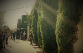 כניסה עצים.jpg